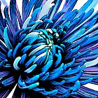 Blue Crazy Flower by Modified