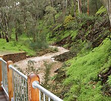 """Morialta Trek"" by Gail Mew"