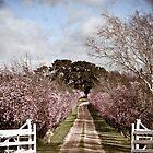 Driveway by Nicole  Hastings