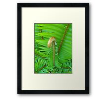 green fern leaves nature pattern. spring wild nature photography. Framed Print