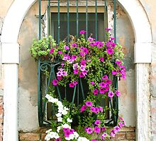 Petunias Through Wrought Iron by Donna Corless