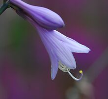 Softness by natureloving