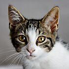 Millie as a Kitten by AnnDixon