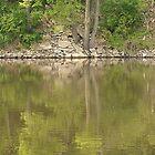 Tree Reflection at Monkey Island by tkwist