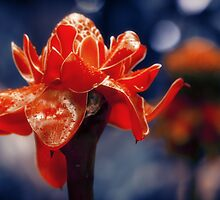 Exotic Flower Etlingera Elatior by cinema4design