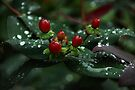 Water Drop Berries by Elaine  Manley