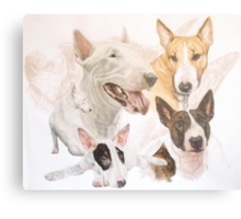 Bull Terrier /Ghost Metal Print