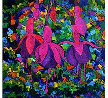 Fuschia flowers Photographic Print