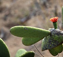 cactus  blooming in the desert by mrivserg