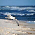 Gull and Gulf by MarjorieB