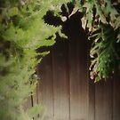 The Secret Door by Barbara Gordon