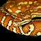 Hypomelanistic Bredl&#x27;s or Centralian Carpet Python [Morelia bredli] by Shannon Plummer