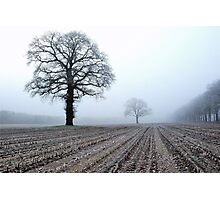 Old oak-trees in winter morning mist Photographic Print
