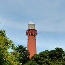 Old Barney - Barnegat Light House NJ - Behind the Trees by Paul Gitto