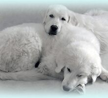 Adorable Babies Ready for a Snooze by vette