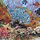 Stylized photo of coral reef still-life. by NaturaLight