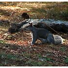 Ardilla Frisada (Frozen Squirrel) by www4gsus