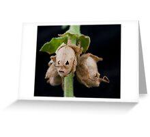 snapdragon seepod skulls 2 Greeting Card