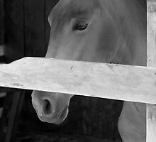 Longing Horse by Reese Forbes