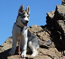 Bella on the Mountain above Farmington Canyon 3 by Deborah  Allen