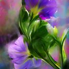 Morning Glory by Francine Dufour Jones