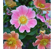 Pink Flower Standout Photographic Print