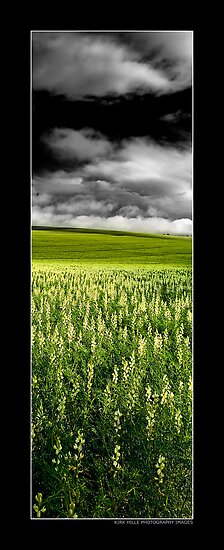 Fields by Kirk  Hille