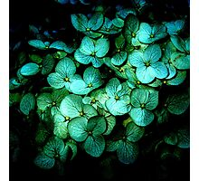 Flowers in blue  Photographic Print