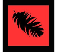 Feather in Black and Red  Photographic Print