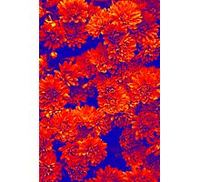 Flowers in blue & red  Photographic Print
