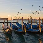 Venice freedom by Yannis Larios