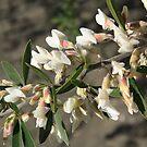 Blossom by Faith Barker Photography