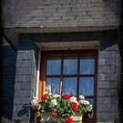 Window Box by Elaine Teague