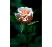 Delight In Beauty Photographic Print