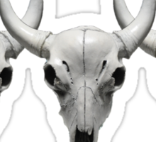 Cow Steer Skull , Hunting Photograph Sticker