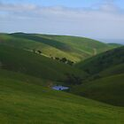 dappled hills by shallay