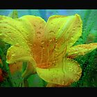 Day Lily - Water Lily - Wood Lily by JanG