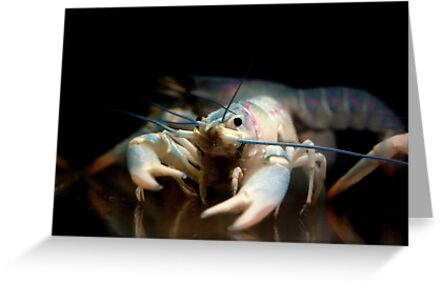 ~Bubba: Australian Blue Yabby~ by a~m .