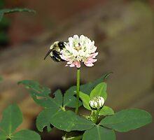 Busy Bee II by babyangel