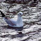 Seagull #1 by Trevor Kersley