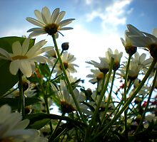 pushing up the daisies by JackEzra