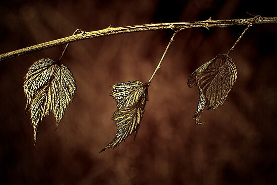 Nature's Clothes Line by Renee Dawson