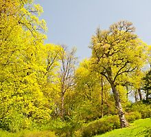 Green spring trees view by Arletta Cwalina