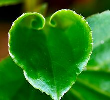 Leaf Love by Natsky