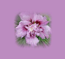 Rose Of Sharon by Jonice
