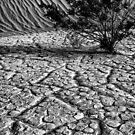 Life in  Death Valley by Varinia   - Globalphotos