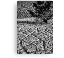 Life in  Death Valley Canvas Print