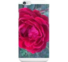 Blooming like a red rose iPhone Case/Skin