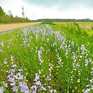 Wildflowers & Roadways by WildestArt