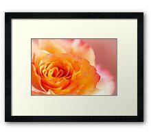 The Rose 1 Framed Print